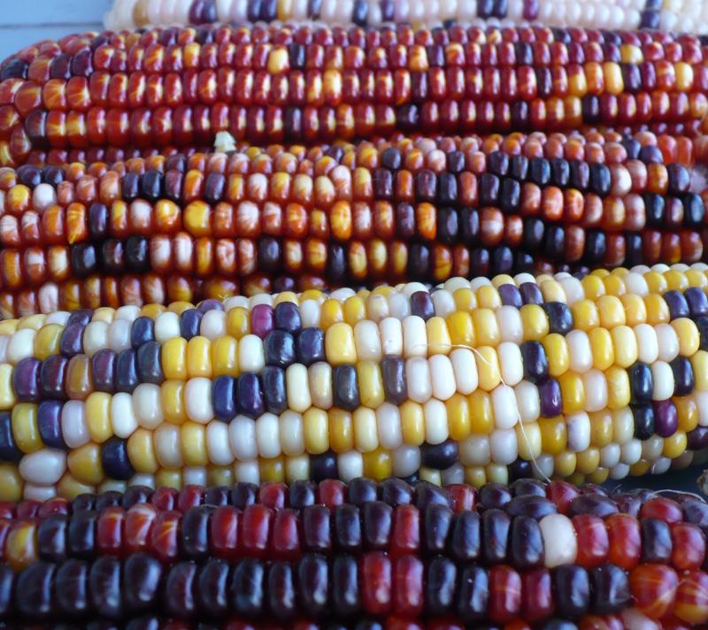 Corn winner
