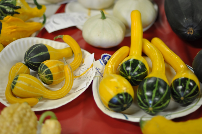 Fair gourds