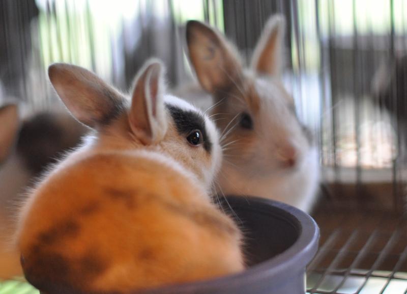 Animal 10 rabbits