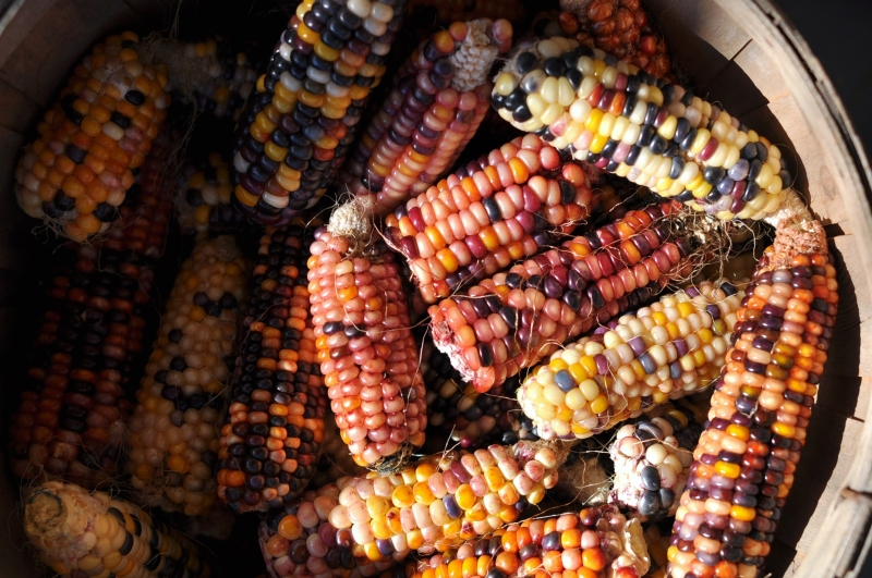 Pink corn