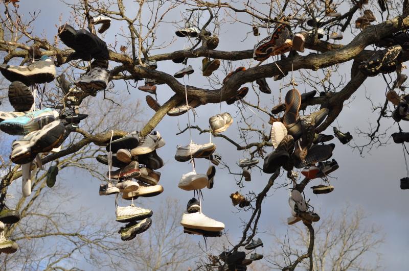 Shoe tree 2