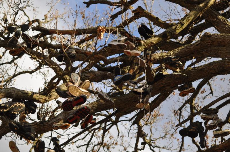 Shoe tree 3