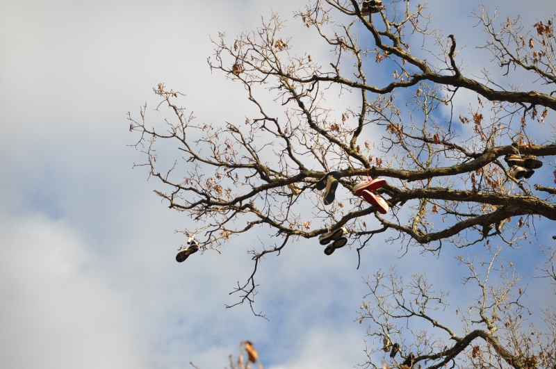 Shoe tree 5