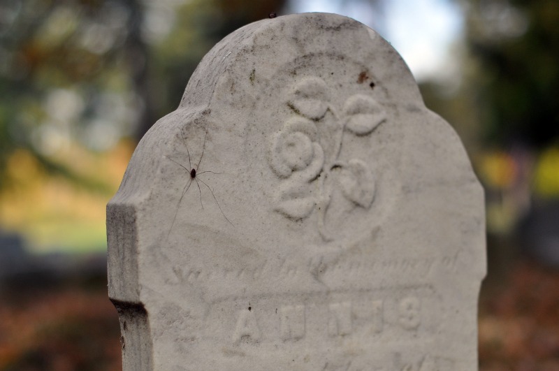 Cemetery annis