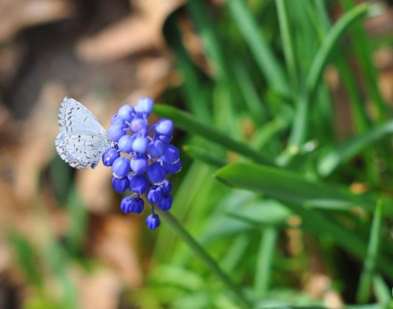 122. butterfly