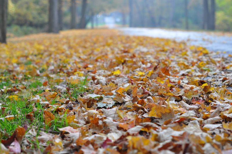 Cemetery leaves