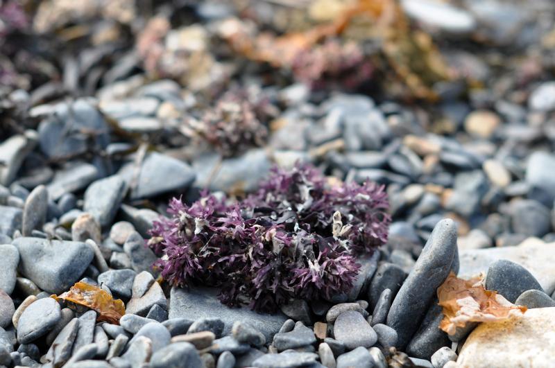 Found purple