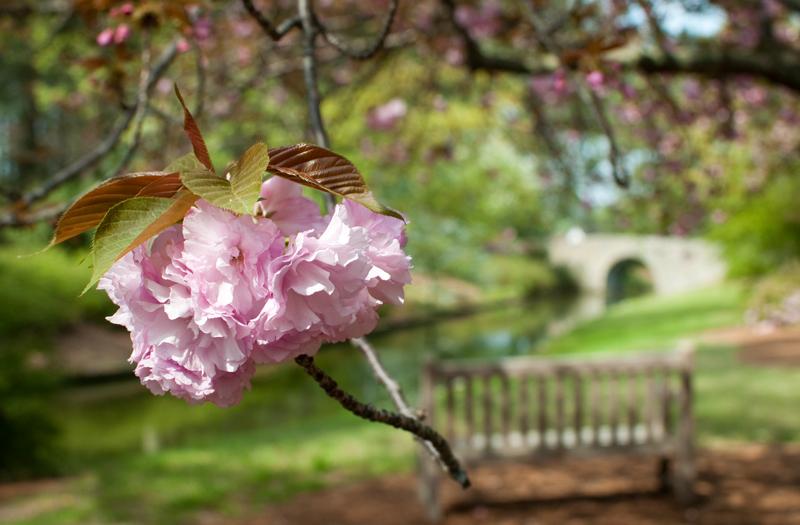 Botanical gardens 8