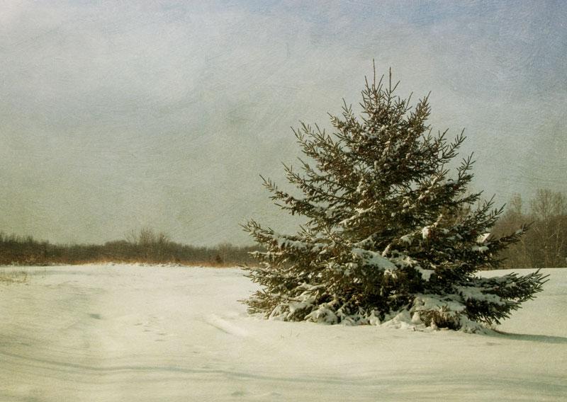 Spruce-tree-textured