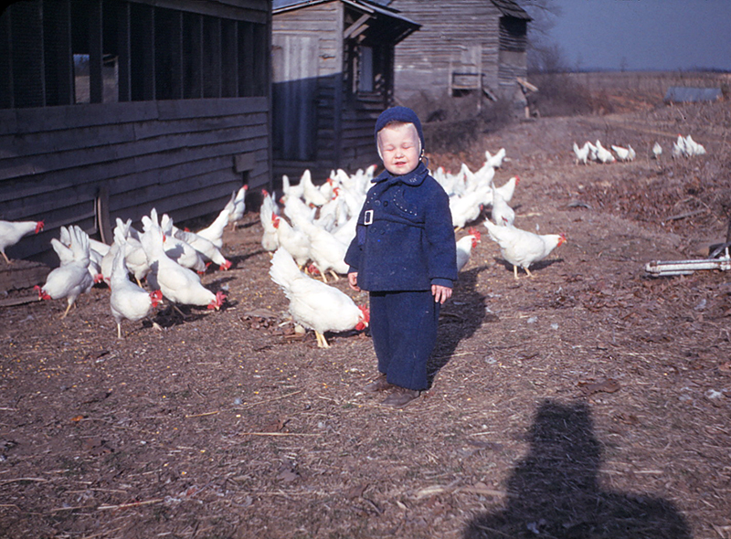 Dad and chickens