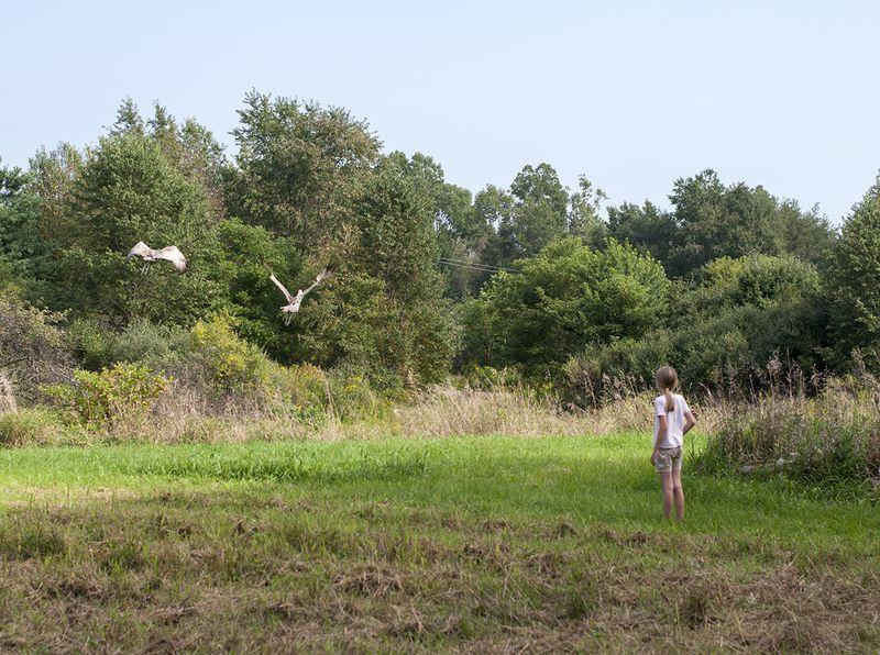 Cranes - sneaking up