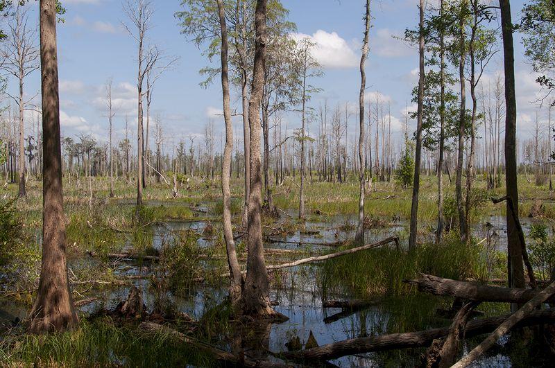 SB 1 Okefenokee Swamp