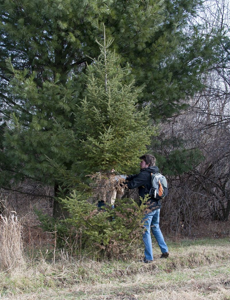 D cuts a tree