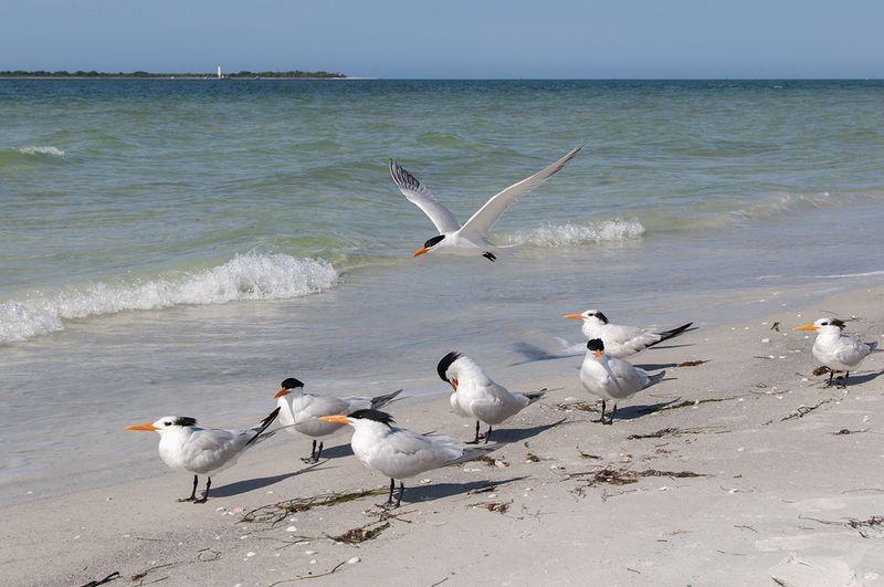 Spring break florida sea birds