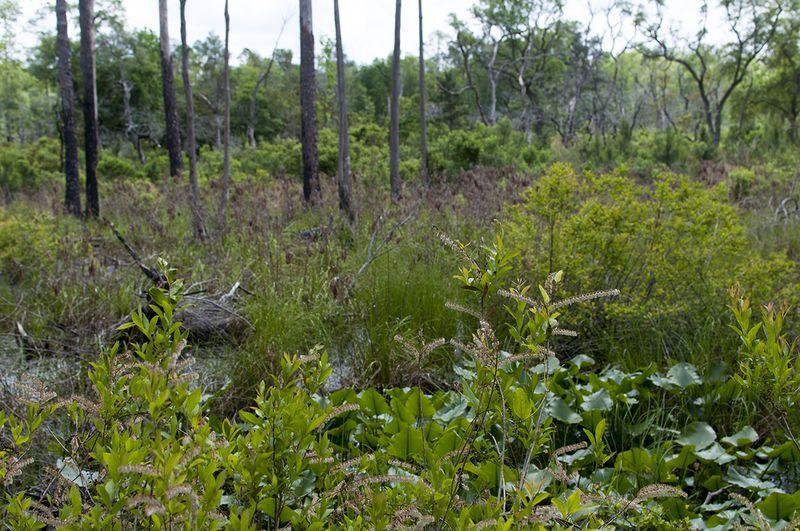 SB  2 Okefenokee Swamp