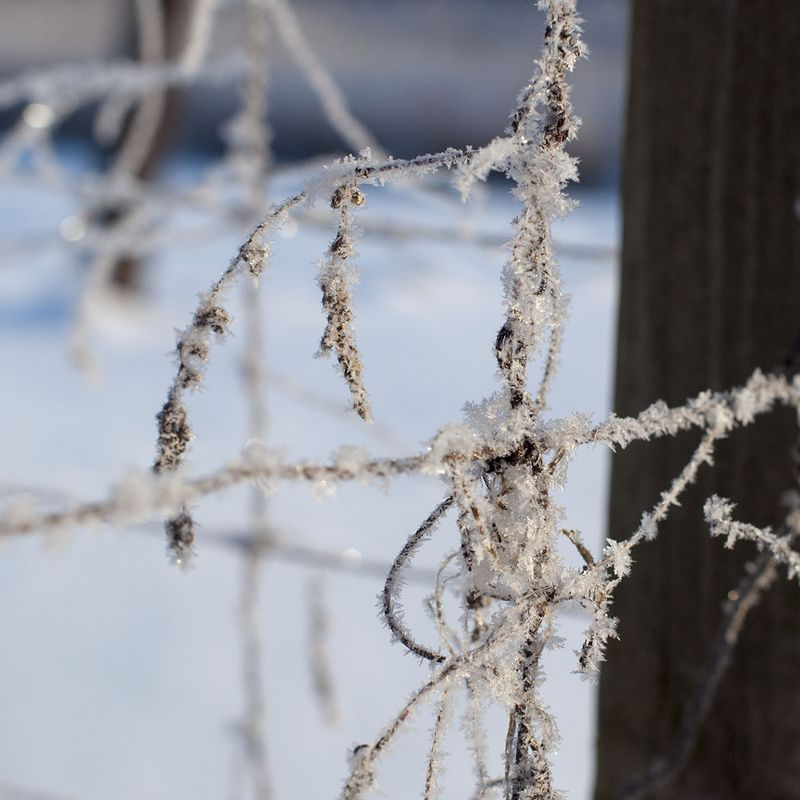 Frosty 3
