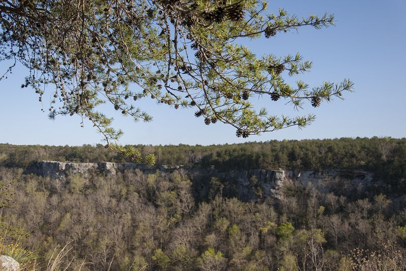 Spring break 8 cliffs and tree