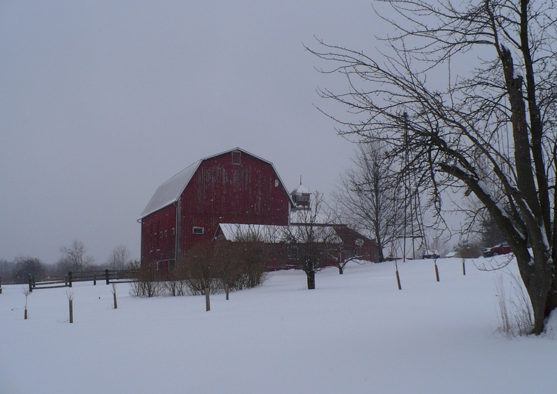 Barns_in_snow