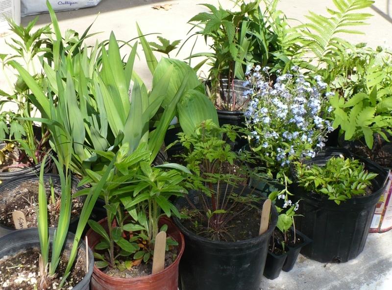 Plant Sale Lynn Carson Harris