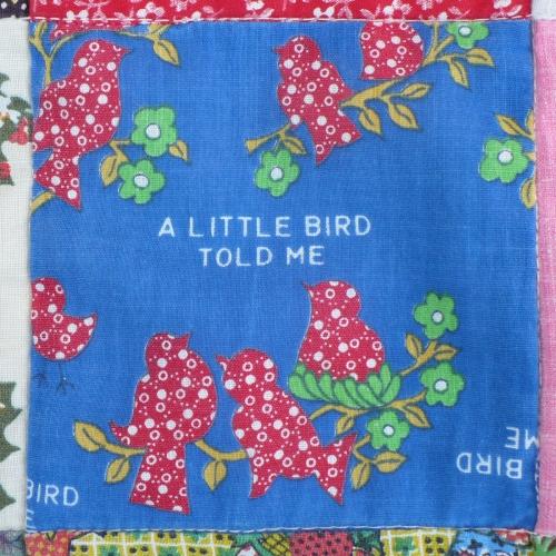 A_little_bird